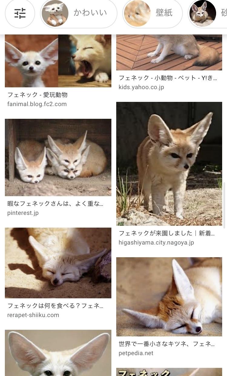 お気に入りの動物とハンチング_a0157872_01404655.jpeg