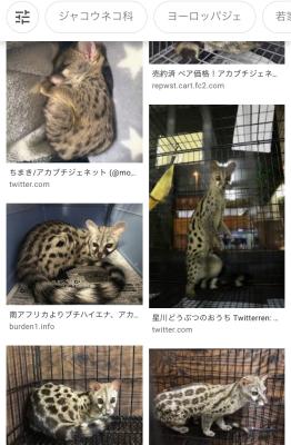 お気に入りの動物とハンチング_a0157872_01410790.jpeg