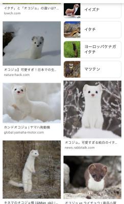 お気に入りの動物とハンチング_a0157872_01423175.jpeg