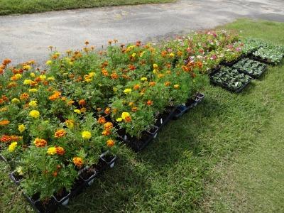南陽学区さんに、花鉢の販売をしました!R2.9.26_d0338682_09332799.jpg