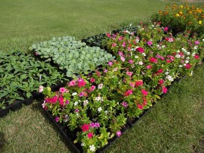 南陽学区さんに、花鉢の販売をしました!R2.9.26_d0338682_09333698.jpg