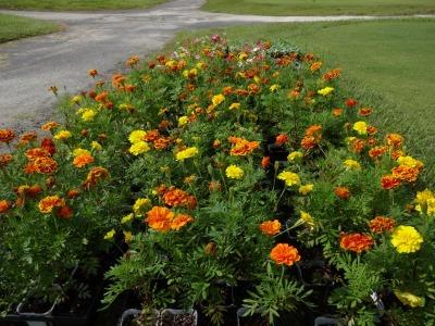 南陽学区さんに、花鉢の販売をしました!R2.9.26_d0338682_09345915.jpg