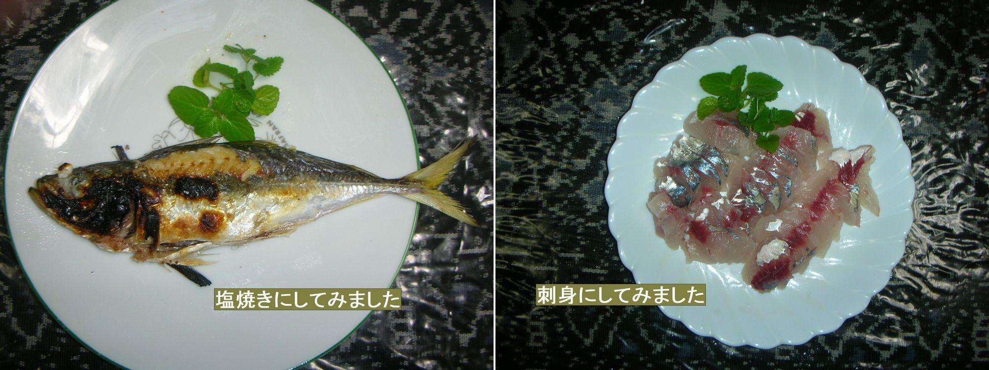 ヤザワ渡船にてアジ釣り(2020-11-17)_a0016431_14410742.jpg