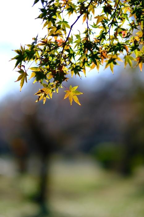 小石川植物園 初冬の光_f0050534_22062855.jpg