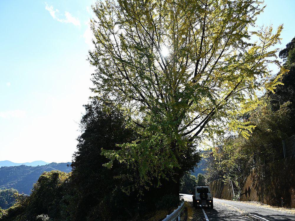 三辻山を歩く_b0370155_16351997.jpg