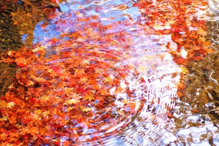 鮮麗の紅葉。_b0188757_10284170.jpg