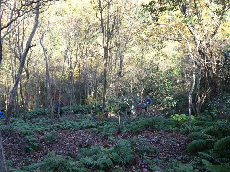 きのくに子どもNPO「孝子の森で里山体験」参加者 29名_c0108460_18092664.jpg