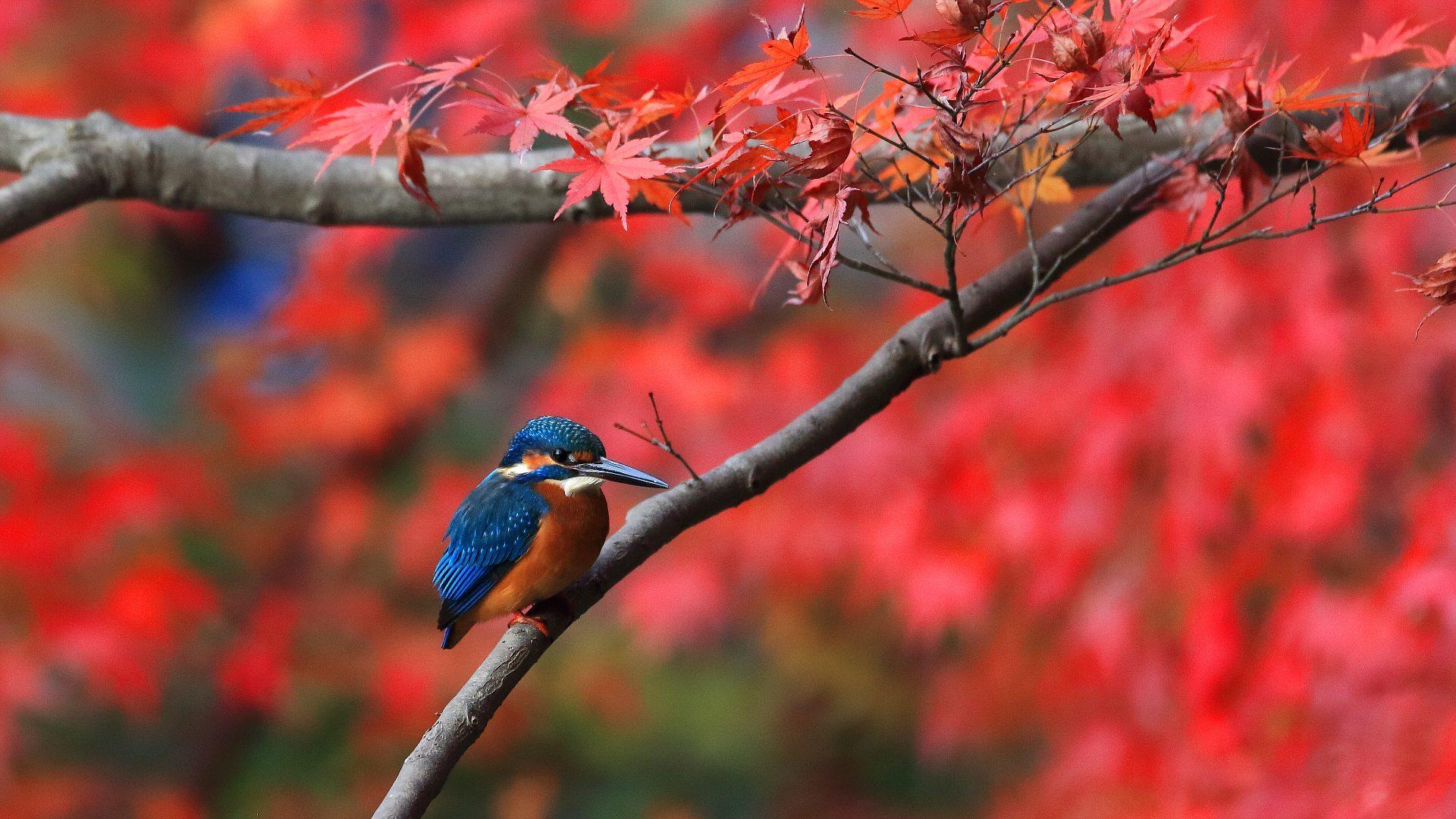 今年はカワセミと紅葉の当たり年!_f0105570_21045688.jpg