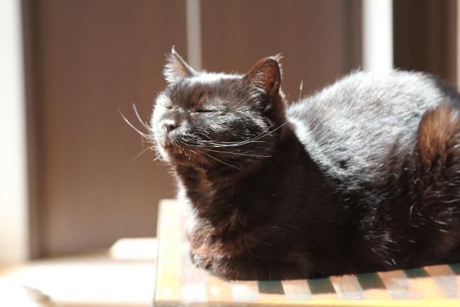 【新刊のご案内】咲セリさん『息を吸うたび、希望を吐くように 猫がつないだ命の物語』_f0357923_11564298.jpg
