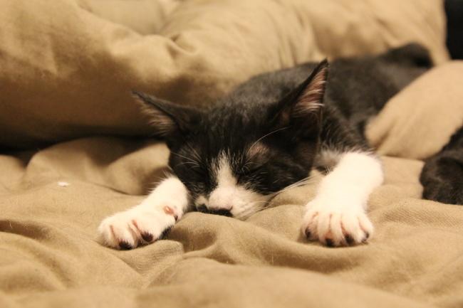 【新刊のご案内】咲セリさん『息を吸うたび、希望を吐くように 猫がつないだ命の物語』_f0357923_11581252.jpg