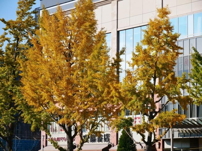 和歌山城公園の 紅葉・黄葉  2020-12-08 00:00_b0093754_21001465.jpg