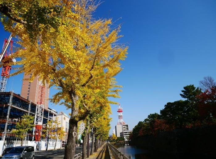 和歌山城公園の 紅葉・黄葉  2020-12-08 00:00_b0093754_21002560.jpg
