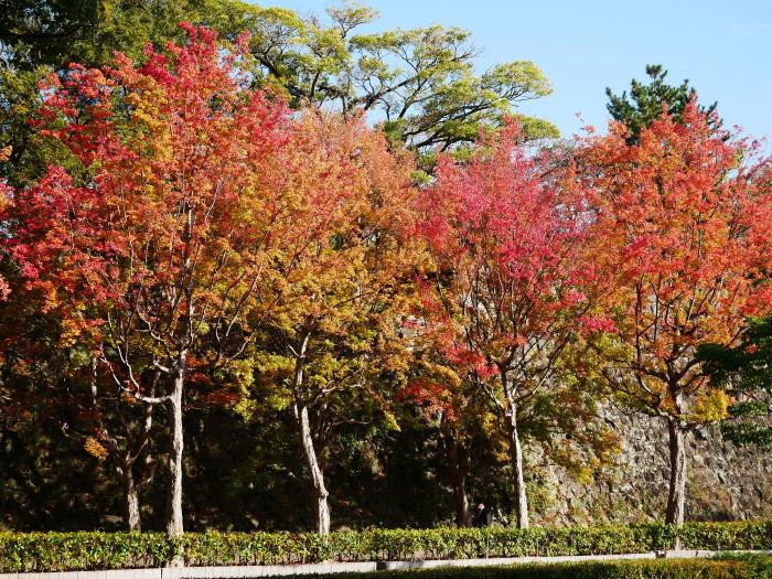 和歌山城公園の 紅葉・黄葉  2020-12-08 00:00_b0093754_21011784.jpg