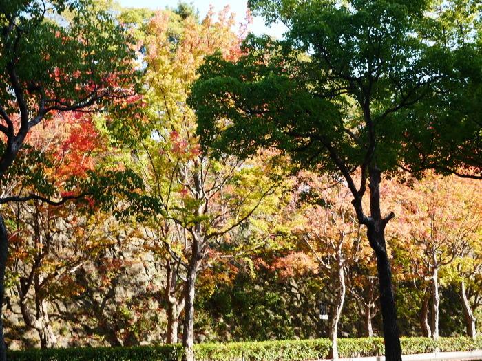 和歌山城公園の 紅葉・黄葉  2020-12-08 00:00_b0093754_21013712.jpg