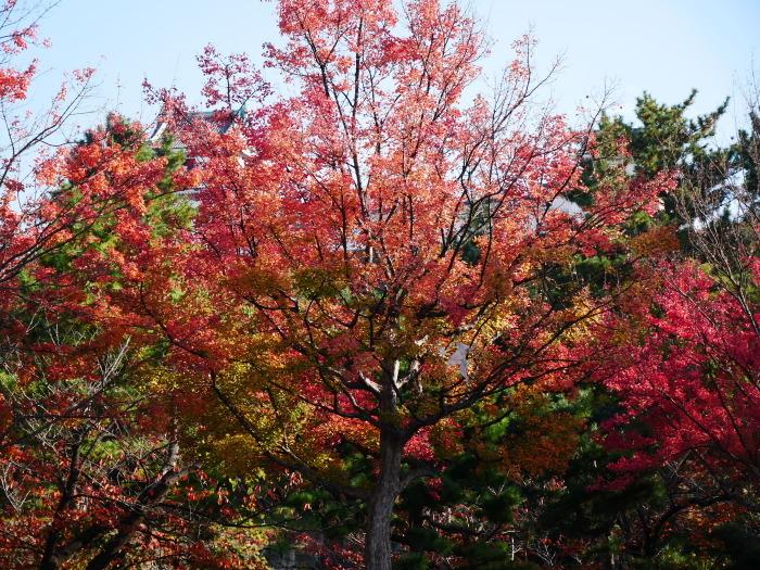 和歌山城公園の 紅葉・黄葉  2020-12-08 00:00_b0093754_21014600.jpg