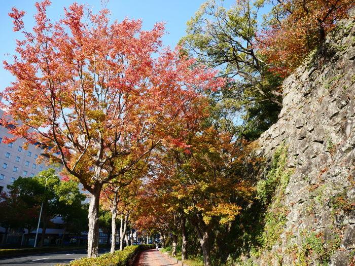 和歌山城公園の 紅葉・黄葉  2020-12-08 00:00_b0093754_21024026.jpg