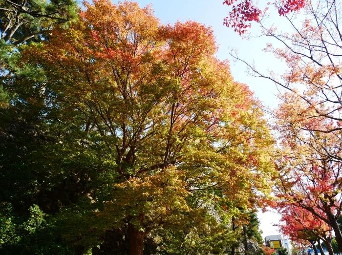 和歌山城公園の 紅葉・黄葉  2020-12-08 00:00_b0093754_21030766.jpg