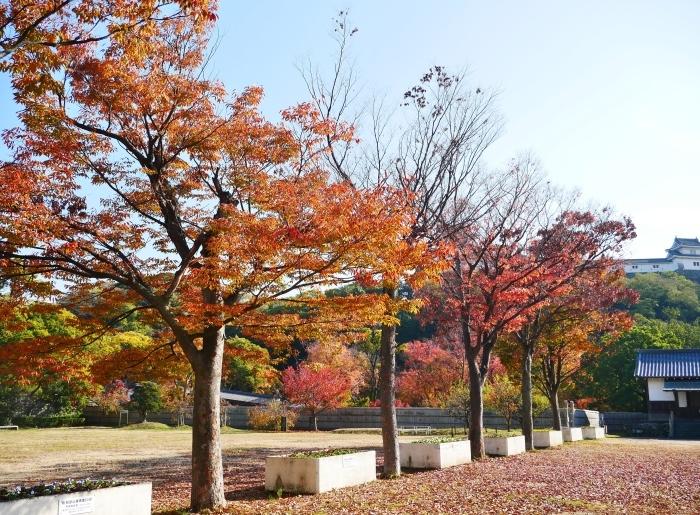 和歌山城公園の 紅葉・黄葉  2020-12-08 00:00_b0093754_21032283.jpg