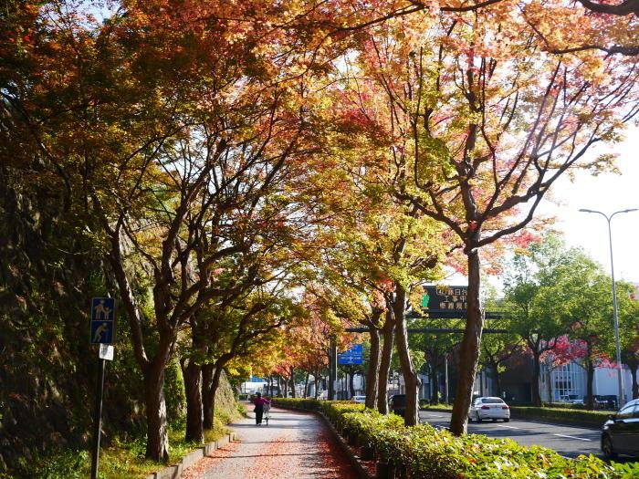 和歌山城公園の 紅葉・黄葉  2020-12-08 00:00_b0093754_21033529.jpg
