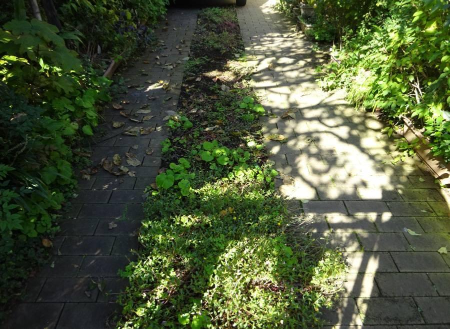 アプローチ花壇の植替え(R2.秋)_f0059673_22314842.jpg