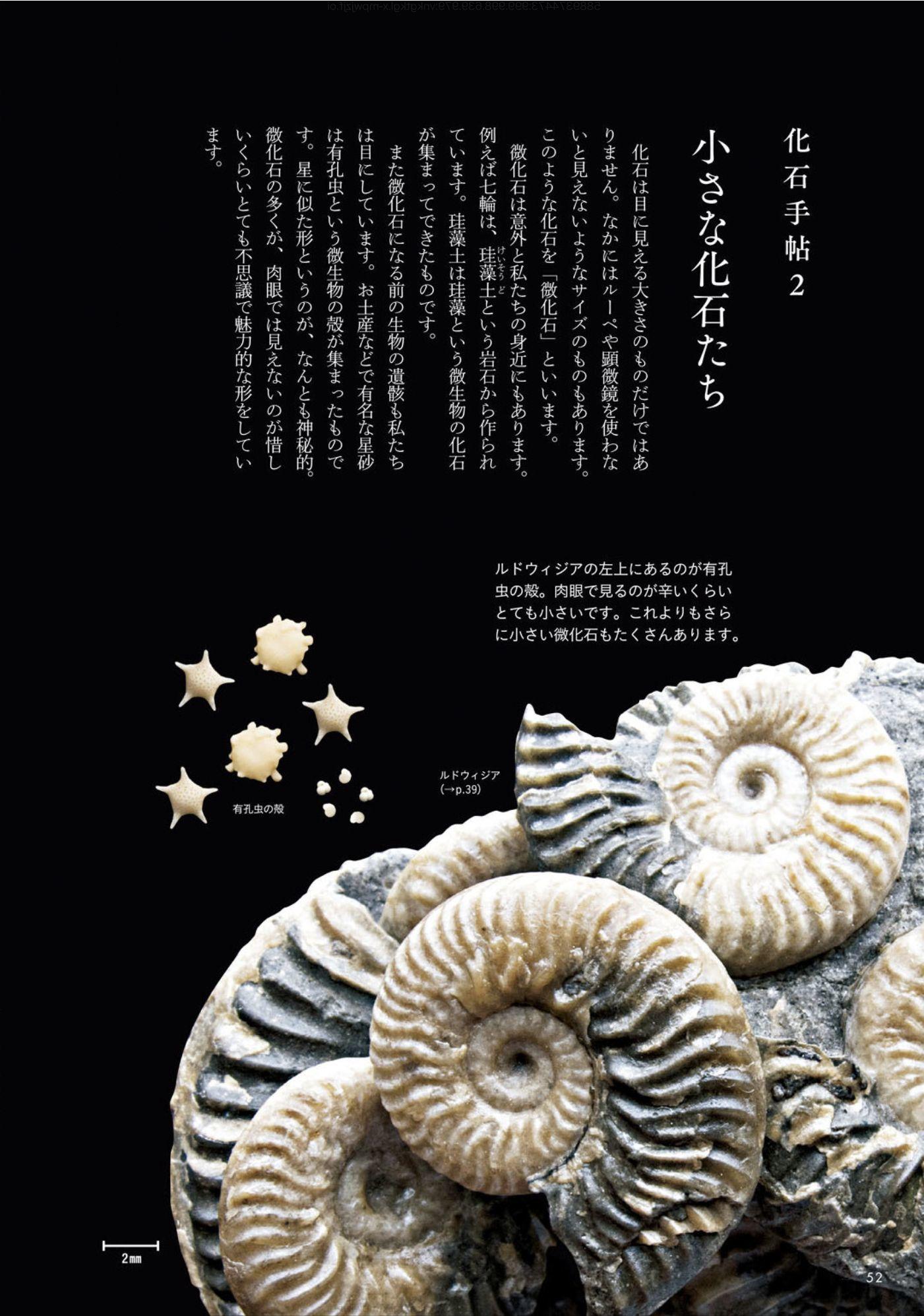 クワズイモとクマネズミと「ときめく化石図鑑」_c0025115_21575015.jpg