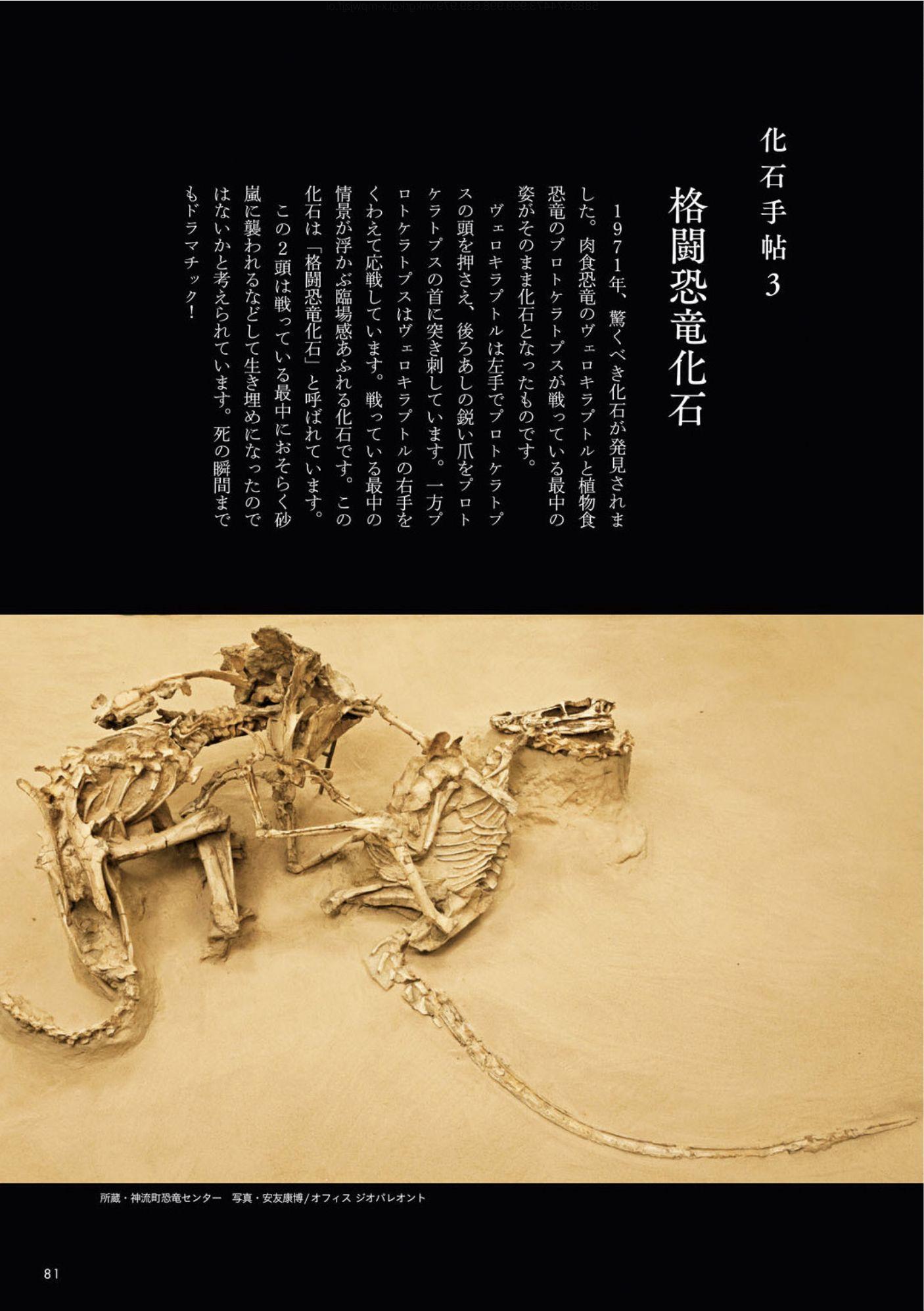 クワズイモとクマネズミと「ときめく化石図鑑」_c0025115_21575892.jpg