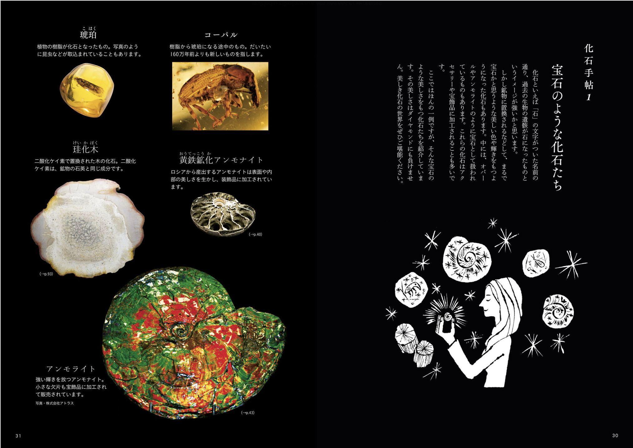 クワズイモとクマネズミと「ときめく化石図鑑」_c0025115_21585620.jpg
