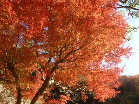 バードウォッチング・森林植物園_c0218841_11453968.jpg