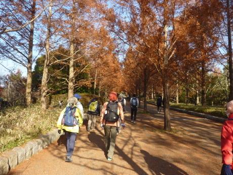 バードウォッチング・森林植物園_c0218841_11512902.jpg