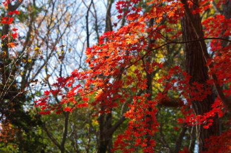 バードウォッチング・森林植物園_c0218841_13493548.jpg