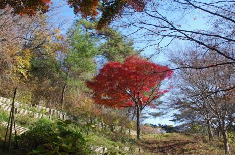 バードウォッチング・森林植物園_c0218841_13503054.jpg