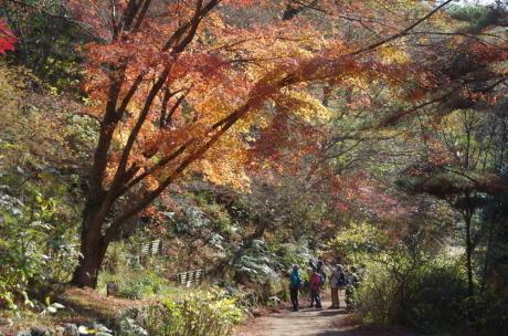バードウォッチング・森林植物園_c0218841_13504557.jpg
