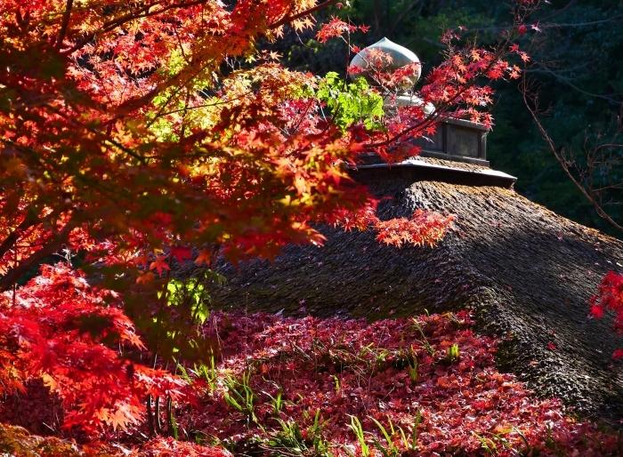 紅葉渓庭園・鳶魚閣(えんぎょかく)  2020-12-10 00:00_b0093754_23100276.jpg