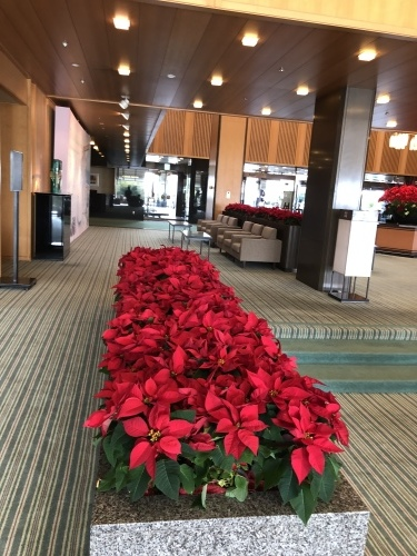 クリスマスの花_f0200477_17511248.jpeg