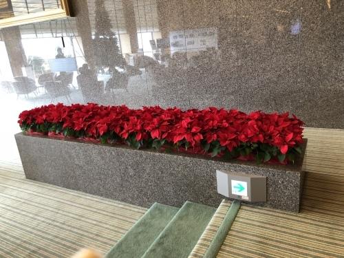 クリスマスの花_f0200477_17515027.jpeg