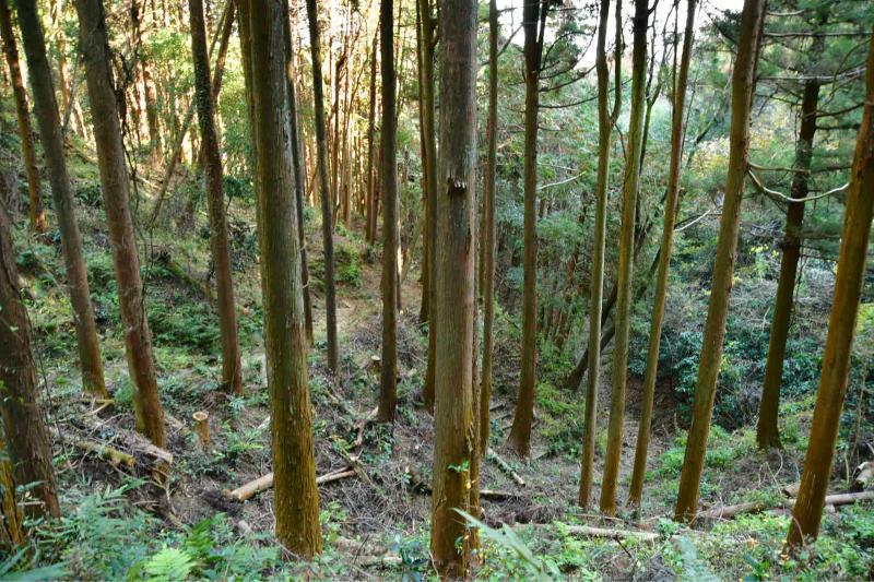 Mimase Pass 下山_b0223512_14413492.jpg