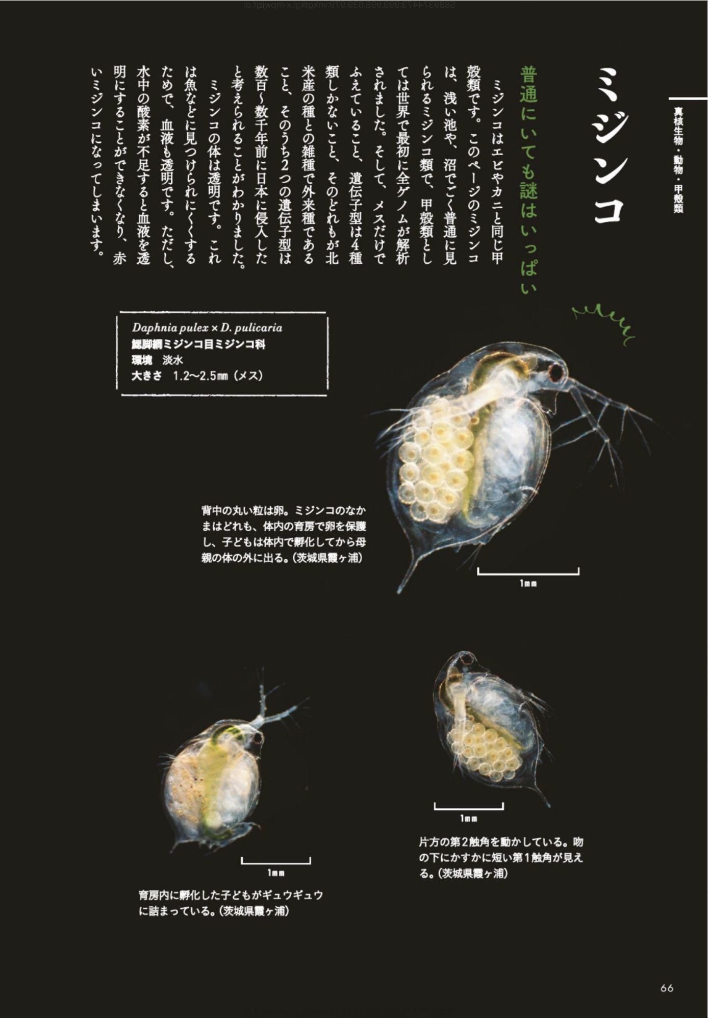 新規感染者数記録更新と「ときめく微生物図鑑」_c0025115_22035838.jpg