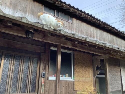 猫と干支の置物展 2020〜記録 5_d0336460_10175359.jpeg