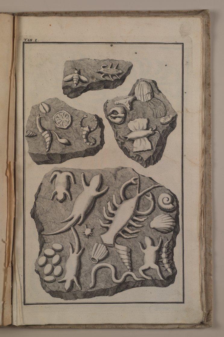 止まらない感染拡大とヨハン・ベリンゲル教授の偽化石_c0025115_22225958.jpg