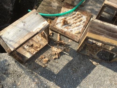 日本ミツバチ絶不調 ミツロウを精製_e0181260_07142338.jpeg