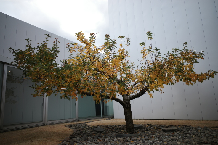 Go to トラベル in 青森県 その13 ~ 十和田市現代美術館_a0287336_21101895.jpg