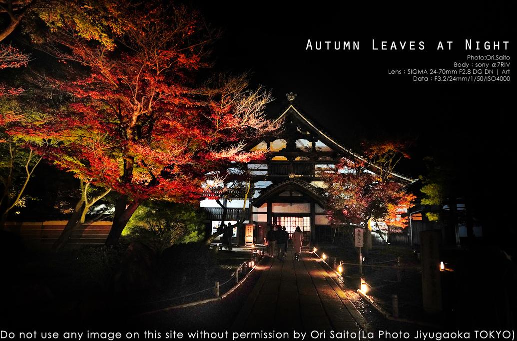 京都、あの夜。高台寺ライトアップをSIGMA 24-70mm F2.8 DG DN Art + sony α7RIV 実写_f0212049_03050859.jpg