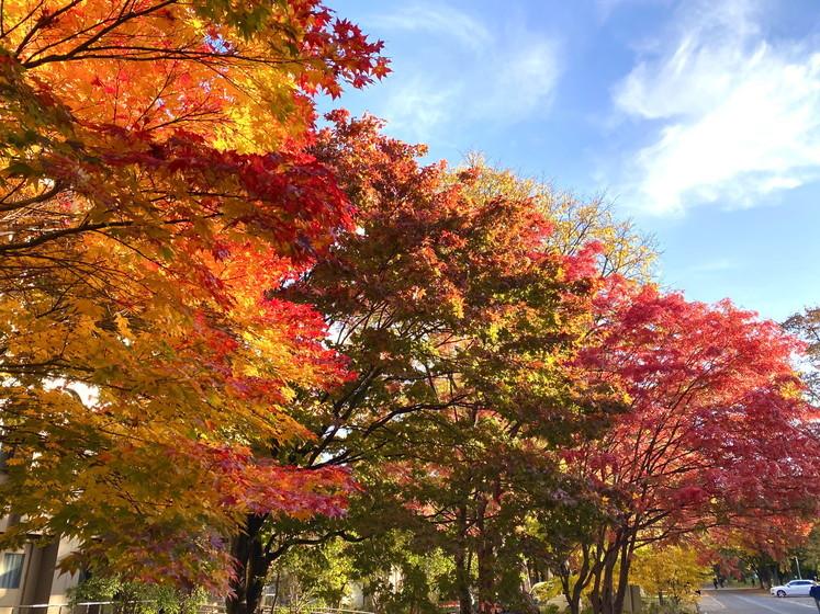 """2020年10月 『錦秋の札幌:八剣山、中島公園、北海道大学』October 2020 \""""Autumn Color in Sapporo\""""_c0219616_17575882.jpg"""