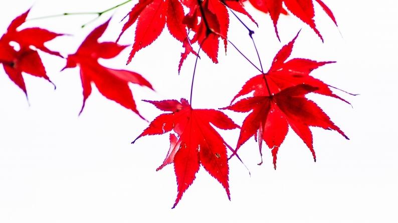 名残の紅葉 020/12/3_d0060435_23180184.jpg