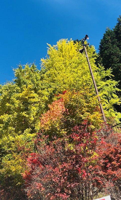 紅葉~三峯神社٩(´꒳`)۶_e0152329_16471509.jpg