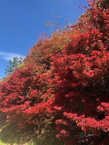 紅葉~三峯神社٩(´꒳`)۶_e0152329_16573866.jpg