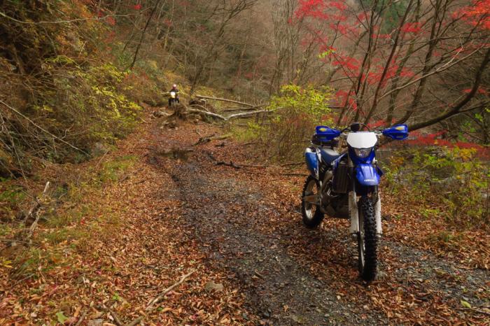 初冬のいわき林道ツーリング (WR250F)_f0126932_20054391.jpg