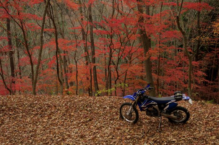 初冬のいわき林道ツーリング (WR250F)_f0126932_20063980.jpg
