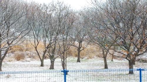初雪が降りました。_c0300035_21445763.jpg