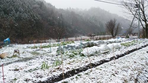 初雪が降りました。_c0300035_21452086.jpg
